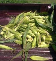 May 19, 2012 corn