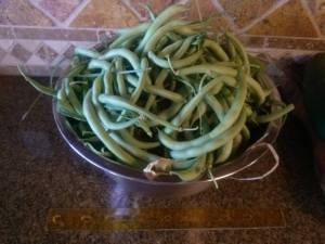 green beans may2013