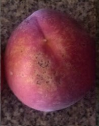 Bacterial Spots on Peach