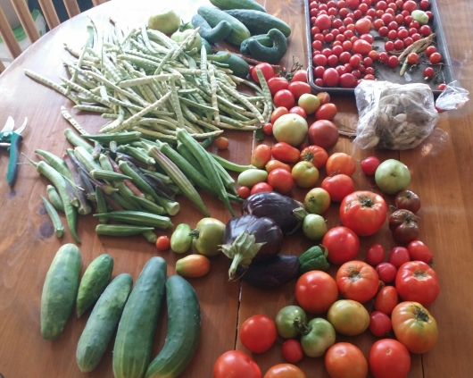 Picture of tomatoes, eggplant, cucumbers, okra and cream peas