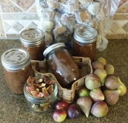 Shown are dried figs, frozen packaged figs, canned fig preserves, and fresh figs