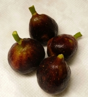 LSU Purple Figs, Nov. 2014