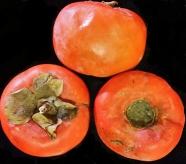 Ripened Persimmon Fruit, November 2014