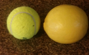Meyer Lemon larger than a Tennis Ball
