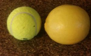 Meyer Lemon larger than a Tennis Ball