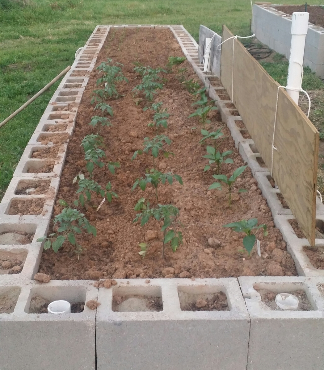 Raised bed with 6 inch tomato and pepper plants added.