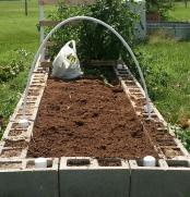 Corn Plants Removed, Soil Open