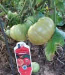 German Strip, Heirloom Tomato