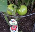 Alley Cat Tomato