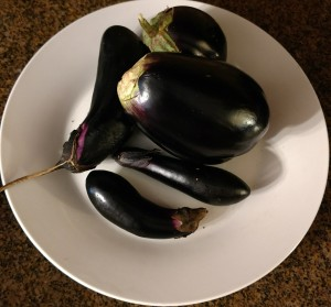 Eggplant fruit harvested about December 18, 2016.