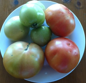Plate with Tomatoes, harvested December 22, 2016