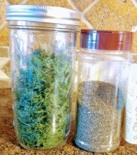 Dried Dill Weed:  Fresh sample is green, store bought is brown