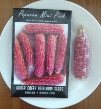 picture of seed packet with mini pop corn on the cob