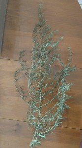 A Tarragon plant with branches and leaves that are dry but still green.