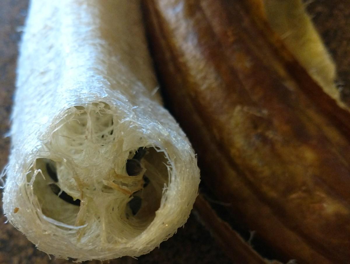 Cross-section of Luffa sponge, dark seeds visible.