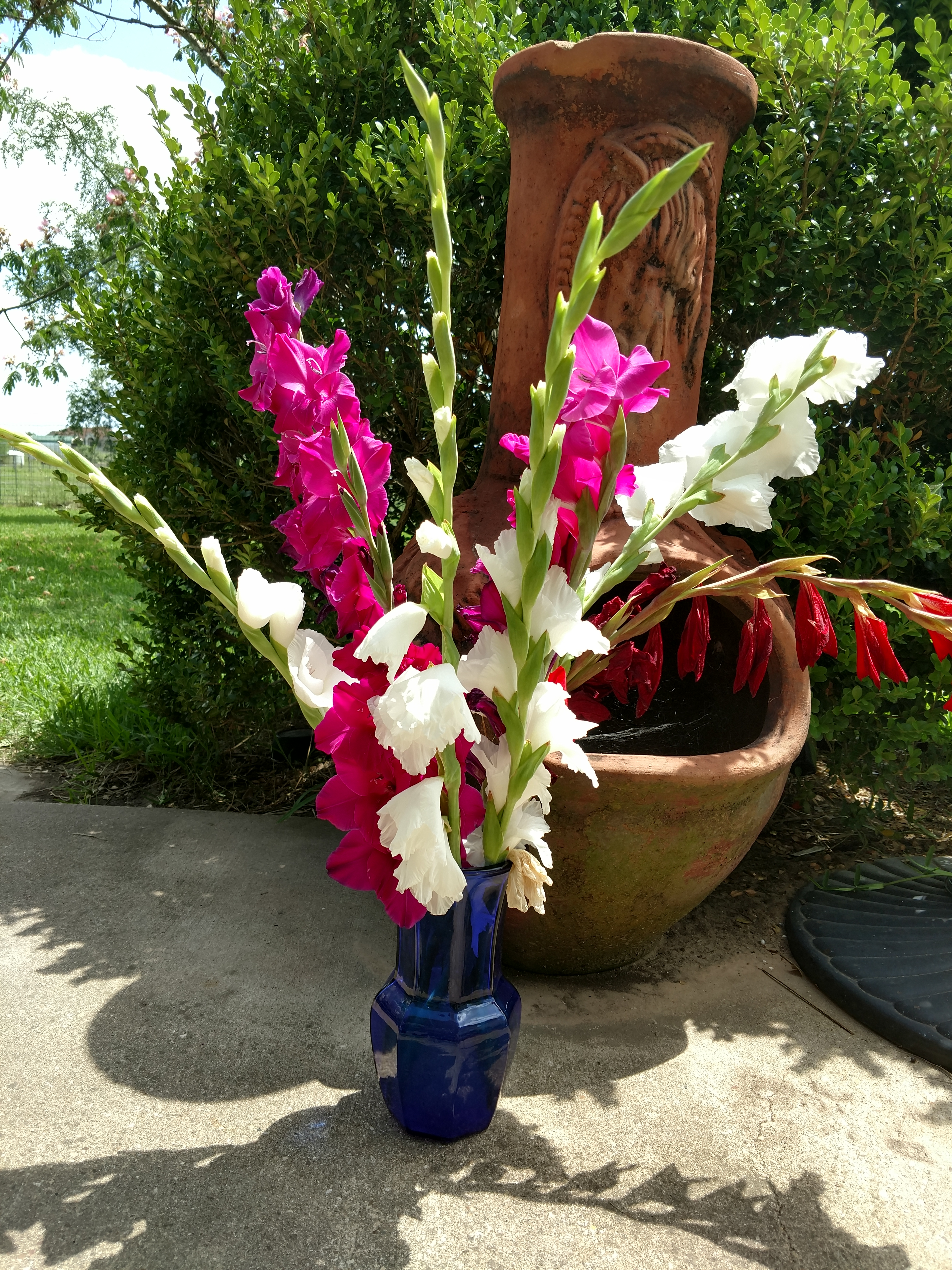 Gladiolas For Cut Flowers The Art Science Of Gardening