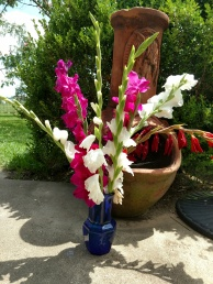 Gladiolas for cut flowers