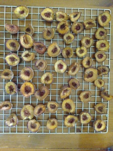 Dehydrated Peach halves still on the dehydrator tray